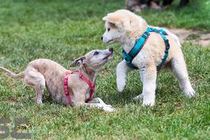 Welpen + Junghunde