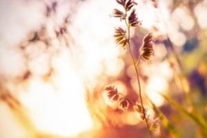 Mama-Baby-Rückbildungsyoga - fortlaufender Kurs am Donnerstag, Termine bis Dezem